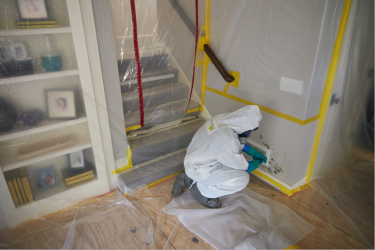 mold remediation rochester mn